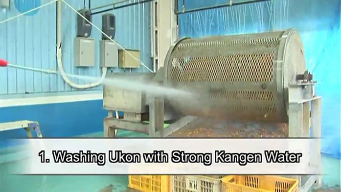 How Kangen Ukon™ is produced